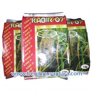 Padi Unggul Kabir 07